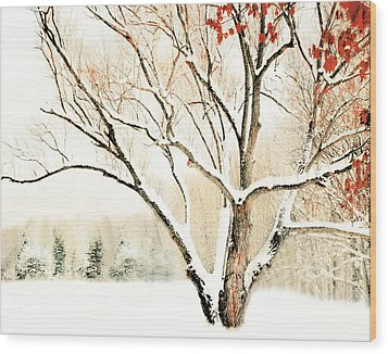 Oak Tree In Winter Wood Print by Dorothy Walker