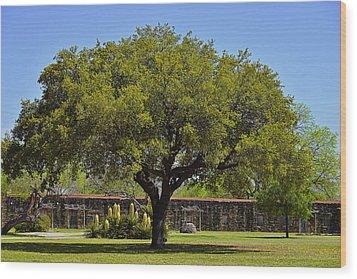 Oak Tree Mission San Jose Tx Wood Print by Christine Till