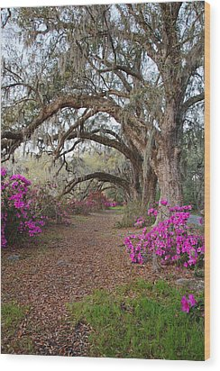 Oak Trees And Azaleas Wood Print