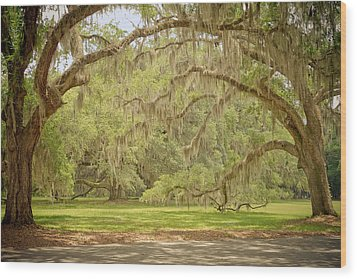Oak Trees Draped With Spanish Moss Wood Print by Kim Hojnacki