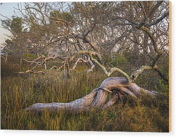 Oak Trees In The Marsh Wood Print by Debra and Dave Vanderlaan