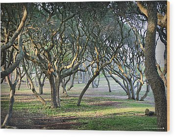 Oaks Of Fort Fisher Wood Print by Phil Mancuso