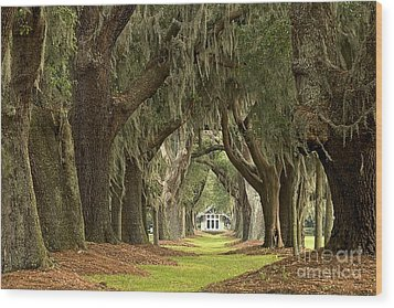 Oaks Of The Golden Isles Wood Print by Adam Jewell