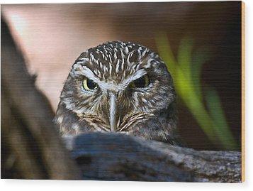 Observant Owl Wood Print by Dave Dilli