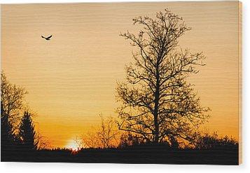 Observer Wood Print by Matti Ollikainen