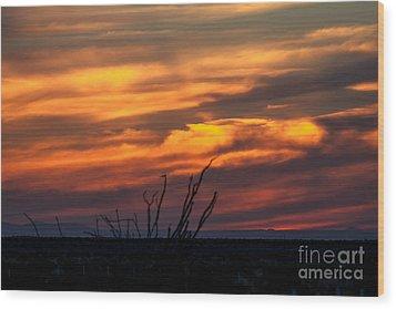 Ocotillo Sunset Wood Print by Robert Bales