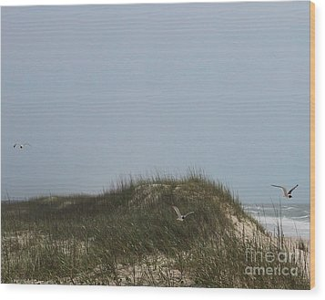 Ocracoke Dunes And Gulls Wood Print by Cathy Lindsey