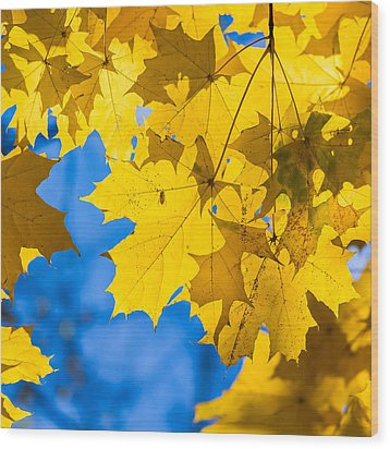 October Blues 8 - Square Wood Print by Alexander Senin