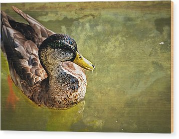 October Duck Wood Print by Marty Koch