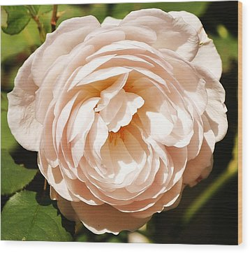 Wood Print featuring the photograph October Rose by Al Fritz
