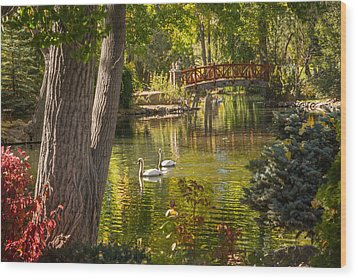 October Swans Wood Print by Janis Knight