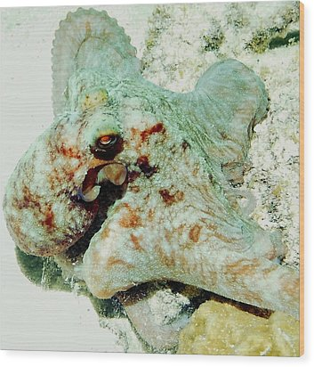 Octopus On The Reef Wood Print by Amy McDaniel