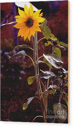 Ode To Sunflowers Wood Print by Patricia Keller