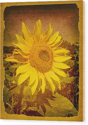 Of Sunflowers Past Wood Print by Bob Orsillo