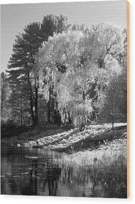 Off The Beaten Path Wood Print by Luke Moore