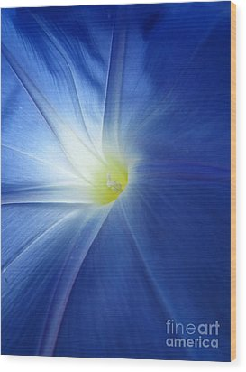 Oh Heavenly Blue 1 Wood Print