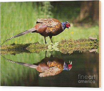 Oh My What A Handsome Pheasant Wood Print by Louise Heusinkveld