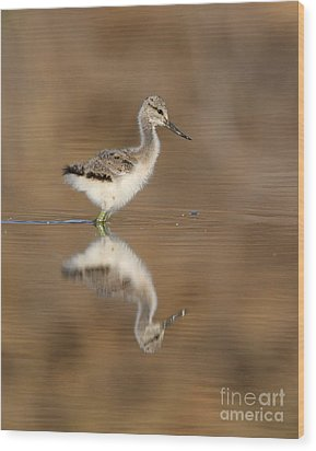 Oh So Sweet Avocet Chick Wood Print by Ruth Jolly