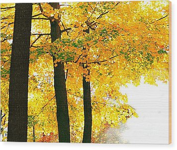 Ohio Autumn Wood Print