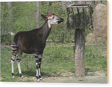 Okapi Wood Print by Judy Whitton