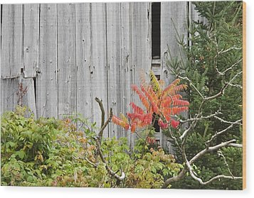 Old Barn In Fall Wood Print by Keith Webber Jr