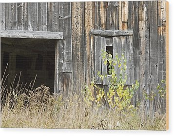 Old Barn In Fall Maine Wood Print by Keith Webber Jr