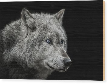 Old Blue Eyes Wood Print by Paul Neville