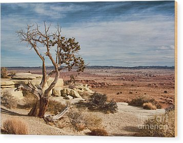 Old Desert Cypress Struggles To Survive Wood Print by Michael Flood