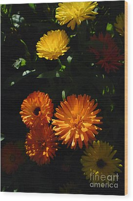 Wood Print featuring the photograph Old-fashioned Marigolds by Martin Howard