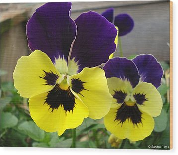 Old-fashioned Pansies Wood Print by Sandra Estes