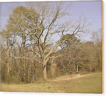 Wood Print featuring the photograph Old Haunted Tree by Amazing Photographs AKA Christian Wilson