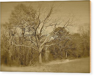 Old Haunted Tree In Sepia Wood Print by Amazing Photographs AKA Christian Wilson