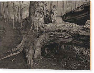 Old Oak 2 Wood Print