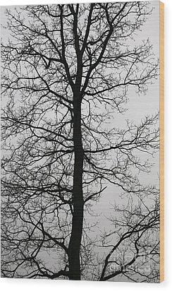 Old Oak In The Grey Sky.  Wood Print by Tanya Polevaya