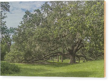 Wood Print featuring the photograph Old Oak Tree by Jane Luxton