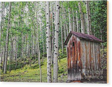 Old Outhouse Among Aspens Wood Print