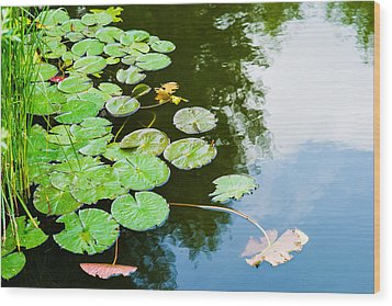 Old Pond - Featured 3 Wood Print by Alexander Senin