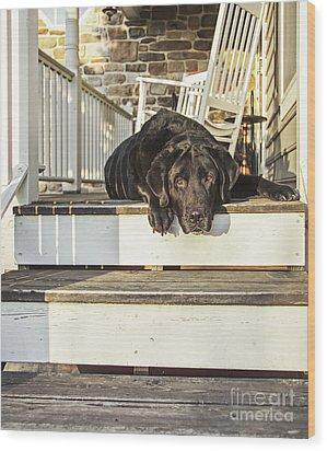 Old Porch Dog Wood Print by Diane Diederich