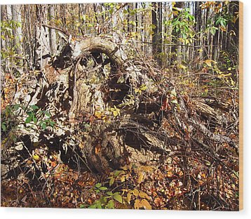 Old Rag Hiking Trail - 12123 Wood Print by DC Photographer