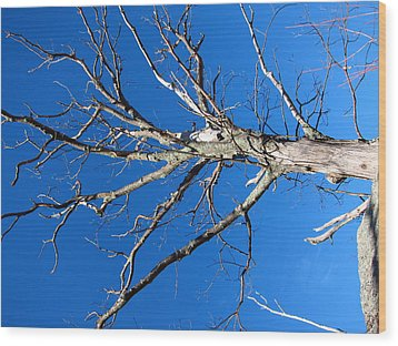 Old Rag Hiking Trail - 121241 Wood Print by DC Photographer
