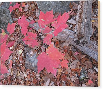 Old Rag Hiking Trail - 121259 Wood Print by DC Photographer