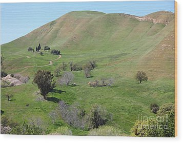 Old Rose Hill Cemetery Atop The Rolling Hills Landscape Of The Black Diamond Mines California 5d2231 Wood Print by Wingsdomain Art and Photography