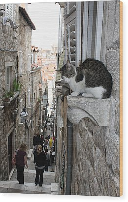 Old Town Alley Cat Wood Print by David Nicholls