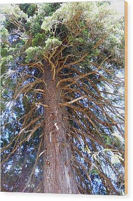 Old Tree 2 Wood Print