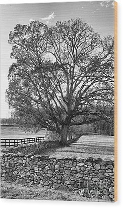 Wood Print featuring the photograph Old Tree In Black And White by John S