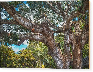 Old Tree In Eureka. Mauritius Wood Print by Jenny Rainbow