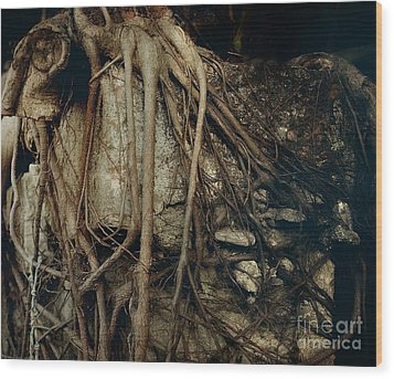 Old Tree On Broken Wall Wood Print by Yali Shi