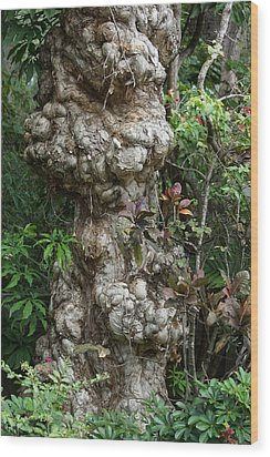 Wood Print featuring the mixed media Old Tree by Rafael Salazar