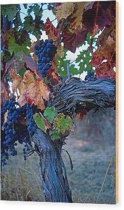 Old Vine Wood Print by Kathy Yates