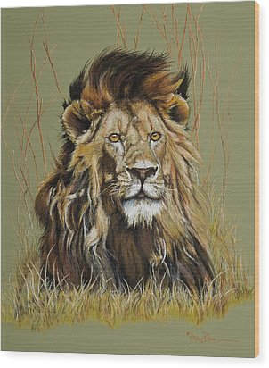 Old Warrior African Lion Wood Print